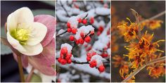 #TuesdayTips  9 Lovely Plants That Bloom in the Chilly Winter Months  - HouseBeautiful.com