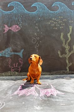 Imagination Hat - Ammo the Dachshund - Under the Sea - Chalkboard Art Chalk Photography, Photography Ideas, Chalk Photos, Chalkboard Art, Chalkboard Drawings, Chalkboard Background, Dachshund Love, Daschund, Weenie Dogs