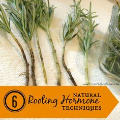 6 Natural Rooting Hormone Techniques