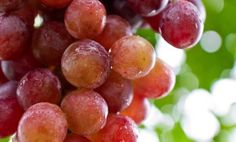 The Fruit That Protects Your Kidneys #grapes #grapehealth - by @Care2 .com
