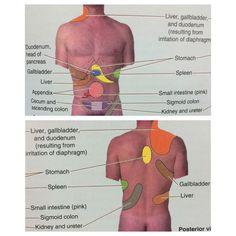 Free oriented anatomy clinically 6th edition pdf