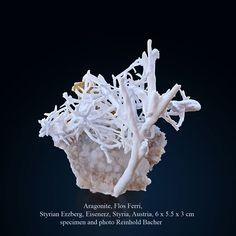 atAragonite, Flos Ferri Styrian Erzberg, Styria, Austria size: 6 x 5.5 x 3 cm #aragonite #flos ferry #erzberg # styria #austria #gems #minerals #rocks #crystal #crystals #nature #mineralspecimen #mineralspecimens #specimen #crystalhealing #mineralogy #geology #bluemountains #beautiful #colorful #luxury #fineminerals