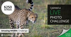 I joined The Amazing Wildlife live photo challenge for my chance to win $250!