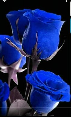 Hottest Screen Blue Flowers rose Thoughts Blue colour is everlastingly appointed… - Blumen