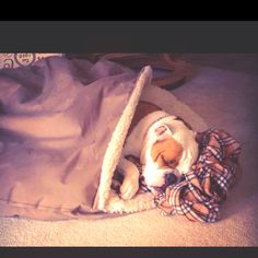 Fave dog bed the cozy cave! A must in every house