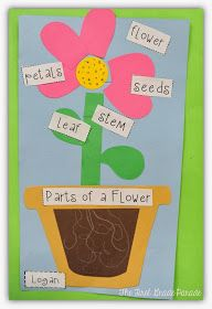 This plant activity can be used for first and second graders. Students are able to learn new words and understand their meaning by looking at the labeled picture of a flower.  -Briana Richardson