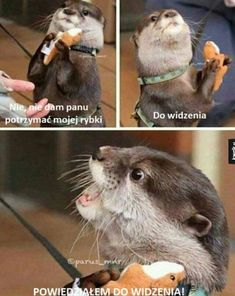 'This is Mine!' - An Otter with an Otter Cuddly Toy Cute Baby Animals, Animals And Pets, Funny Animals, Wild Animals, Otter Love, Amor Animal, Animal 2, Tier Fotos, Cute Animal Pictures