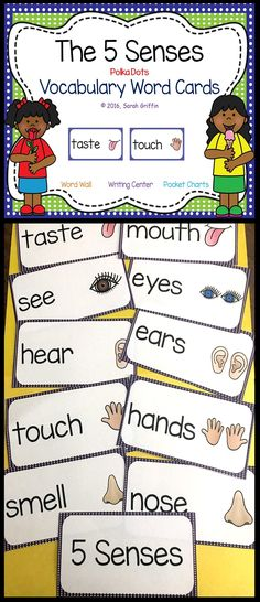 5 Senses Vocabulary Picture Word Cards | Science Word Wall | Pocket Chart | Focus Wall | Bulletin Board | PreK | Kindergarten | first grade | second grade