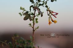 wild flower, nature, photography