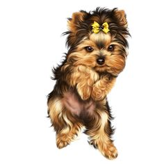Yorky Terrier, Puppy Crafts, Yorkie Clothes, Teacup Yorkie, Cute Dog Pictures, Yorkshire Terrier Dog, Fluffy Dogs, Cute Dogs And Puppies, White Dogs