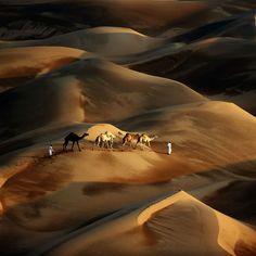 Un beduino conduce a sus camellos por el desierto de Liwa, en la región de Abu Dhabi en los Emiratos Árabes Unidos.