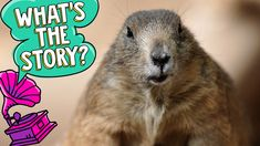 Meet some famous groundhogs that help predict spring's arrival Funny Animal Videos, Animal Memes, Videos Funny, Groundhog Day Activities, Farm Activities, Happy Groundhog Day, Animal Sketches, For Facebook, Sunday School