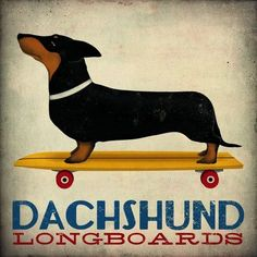 "Printfinders ""Dachshund Longboards"" by Ryan Fowler Graphic Art on Canvas Size: 16"" H x 16"" W"
