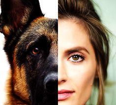 Stana Katic e anda is  wolf-dog.
