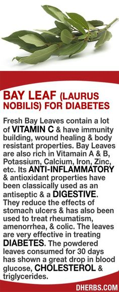 Fresh Bay Leaves contain a lot of Vitamin C & have immunity building wound healing & body resistant properties. Bay Leaves are also rich in Vitamain A & B Potassium Calcium Iron Zinc etc. They can reduce the effects of stomach ulcers & has also been Natural Medicine, Herbal Medicine, Herbal Remedies, Health Remedies, Natural Cures, Natural Health, Health And Nutrition, Health And Wellness, Healing Herbs