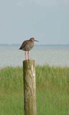 Cottage Living, Coastal Cottage, Goose Bay, Shorebirds, Strand, Sea Birds, Ocean Beach, Bird Watching, Animals Beautiful