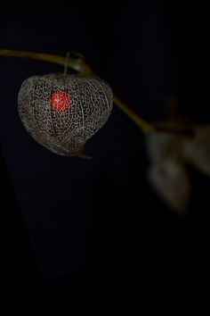 love in a cage | STILL (mary jo hoffman)