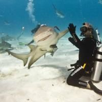 High five with a shark!