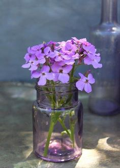 The colour of the vase and the flowers totally compliment each other My Flower, Fresh Flowers, Purple Flowers, Flower Vases, Beautiful Flowers, Lavender Cottage, Lavender Blue, Lavenders Blue Dilly Dilly, Vase Transparent