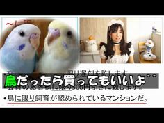 JLPT N2 文法 #5 「に限り」VS「~に限って」Learn Japanese with Takepan T! Online Japane...