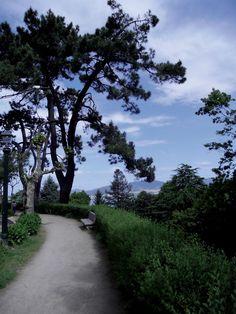 Parque de O Castro (Vigo, Pontevedra). Ruta de la camelia #Galicia