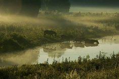 Danube Delta, Carpathian Mountains, Famous Castles, Danube River, Wild Mustangs, Tourist Places, What A Wonderful World, Wild Horses, Romania