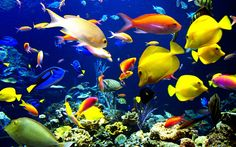 Multi color fish hd wallpapers