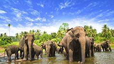 Unschlagbar günstig und ihr Geld wert: Pauschalreisen nach Sri Lanka! Dschungel ja – aber bitte ohne Camp! So plant man Dschungel Urlaub auf die sanfte Weise.