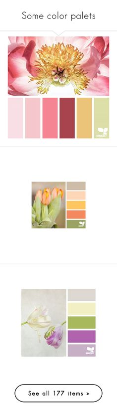 """Some color palets"" by mizzura ❤ liked on Polyvore featuring backgrounds, design seeds, colors, fillers, flowers, effect, pictures, filler photos, filler and colours"