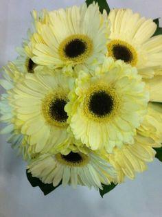 Gerbera bouquet.