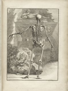 Table 2 of Bernhard Siegfried Albinus' Tabulae sceleti et musculorum corporis humani, 1749, featuring a full length posterior view of a annotated skeleton with its left arm is extended.
