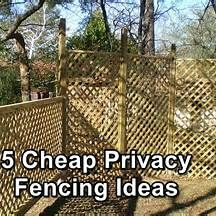257 Best Fencing Images Bamboo Fence Bamboo Furniture Gardening