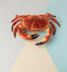 Sam Hofman is a predominately still life photographer and director based in london, shooting creative projects worldwide. Cooking Crab, Spinach Nutrition Facts, Human Doll, Watercolor Projects, Food Photography Styling, Life Photography, Food Styling, Still Life Photographers, Exotic Fish