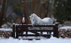 First snow 2016 by Phoenix Ranch - model horse photography