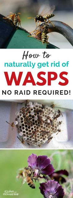 Soapy water Soapy water You don't need Raid or yucky chemicals to kill a wasp nest or bees. Get rid of wasps without chemicals with this super simple natural wasp killer spray recipe. Bee Killer, Wasp Killer, Bee Spray, Wasp Spray, Natural Wasp Repellent, Insect Repellent, Wasp Deterrent, Get Rid Of Wasps, Bees And Wasps