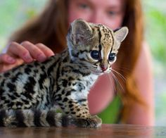 awwww I want one if it wouldn't grow up and eat me!