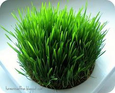 Turmeric & Saffron: Growing Seeds (Sabzeh) For Nowruz (Persian New Year)