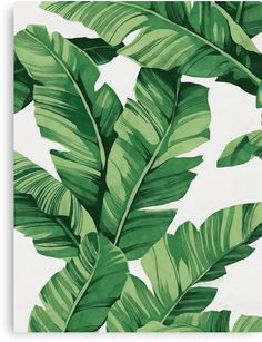 62 Ideas for plants wallpaper iphone leaves tropical Art Tropical, Tropical Leaves, Tropical Plants, Plant Wallpaper, Nature Wallpaper, Iphone Wallpaper, Wallpaper Backgrounds, Palm Leaf Wallpaper, Wallpaper Patterns