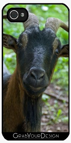 Case for Iphone 5/5S - Billy goat - by PINO