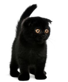 """what do you mean, black cats are unlucky?"" No, they're beautiful nd sweet!"