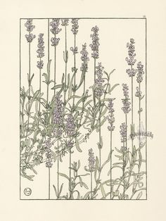 Jeannie Foord «Decorative Plant and Flower Studies: For the Use of Artists, Designers, Students and Others Botanical Drawings, Botanical Illustration, Botanical Prints, Illustration Art, Art Nouveau, Watercolor Flowers, Watercolor Art, Floral Illustrations, Antique Prints