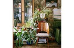 Olga Chagaoutdinova |Plants and Chair in Moscow Apartment. Russian Pictures | C-Print |2005