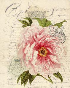 Botanical Print Rose