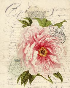 Botanical Print Rose