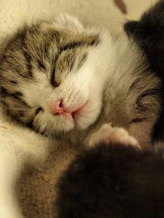 Little Tiger By Ramaadee On Flickr.  Sweet Dreams Beautiful...
