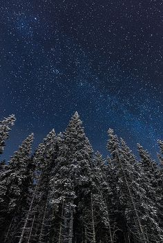 """Moonlit"", by Mikko Lagerstedt / Latyrx, taken 6 Dec. 2012, near Kuopio, Finland: great shot of Milky Way seen above the trees; conveys a fine sense of hush. via Flickr."