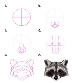 How to Draw Animals: Red Pandas and Raccoons - Envato Tuts+ Design & Illustration Tutorial