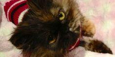 Freida the Throw Away Kitty