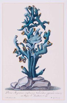 Teal Coral (B)