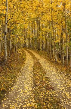 The Road To Solitude is a photograph by Dusty Demerson. A single lane dirt road covered with fallen yellow aspen leaves leads into a peacefull golden forest. Source fineartamerica.com
